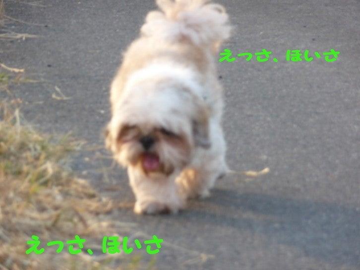 ぷっくり☆かめかめ