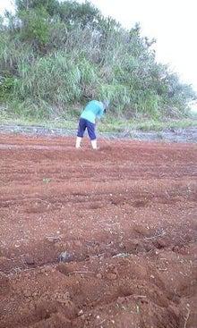 POPでROCKなハッピー農家                     ~徳之島 吉井果樹園~-110930_1648~0001.jpg