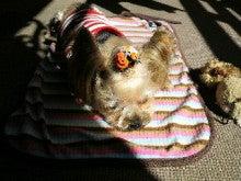 北斗の犬-2011100511120000.jpg