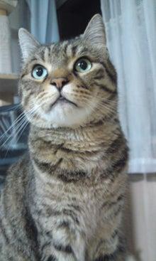 気がつけば、猫がいっぱい-110826_2214~01.jpg