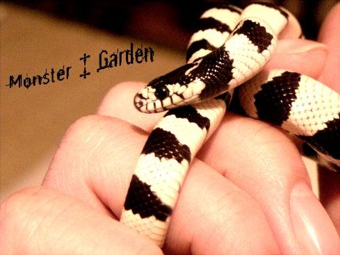 怪物の筐庭-Monster Garden--デザートバンデッド
