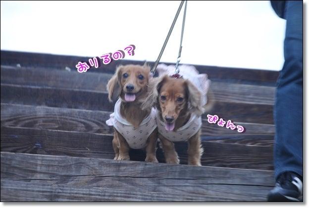 ☆のんルナ仲良し親子withアポロ☆-公園