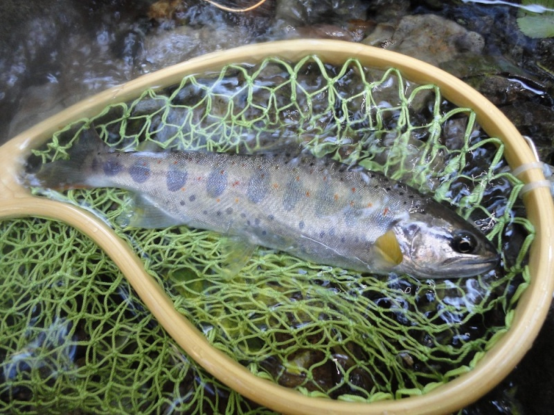 Four Seasons (Fly Fishing&Outdoor)