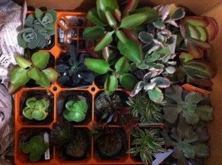 $神戸 のごちそう 神戸 のくらし そして旅・・・ こうべ ガーデンカフェ@2011.10.9