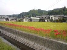 ユープランニングオフィスのブログ-higanbana
