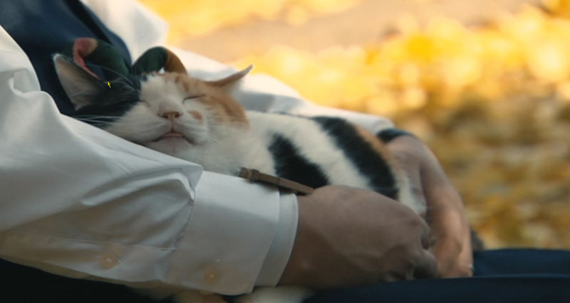 ニャンたル猫じゃ