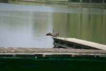 毎日はっぴぃ気分☆-桟橋で羽を乾かす水鳥