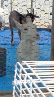 ひだまりクン-201110161100001.jpg