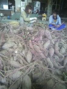 ジャンボ西瓜くんのブログ-2011101509240000.jpg