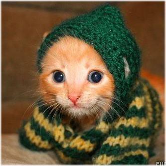 「かわいい動物特集」の画像検索結果