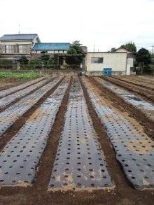 $農業娘(埼玉っ子)が土作りから始める行者大蒜・アスパラ・にんにく栽培-ニンニクマルチB