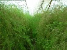 Farm LIfe - 北海道十勝平野より --ハウスアスパラ