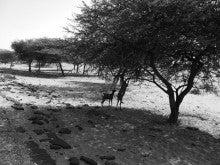 自転車世界横断!!TERU-TERU project-Mauritania roads09