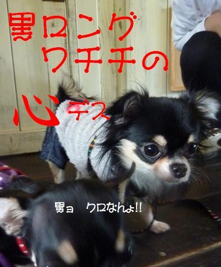 アル&ムーのブログ-クロョ