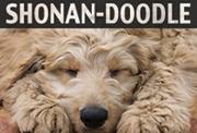 SHONAN DOODLE