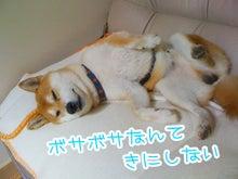 $SOLACAMERA◎京都舞鶴の女子カメラマンブログ