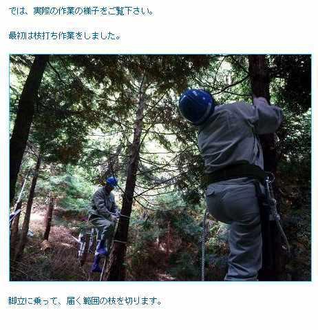 「愛され住宅会社」をつくる、SHIP江川の日記-森づくり