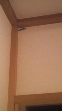 格闘親子と、のほほん母-111025_2038~01.jpg