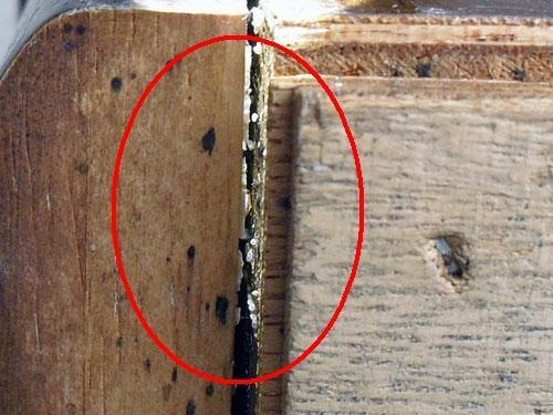 害虫・害獣から街を守るPCOの調査日記-家具の隙間の卵