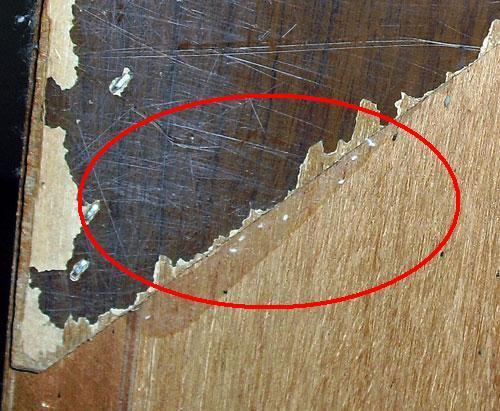 害虫・害獣から街を守るPCOの調査日記-箪笥の底裏の卵