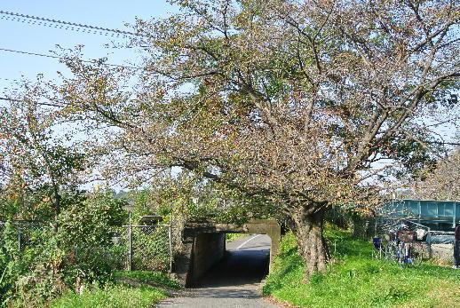 自転車の 越谷 自転車 : 自転車散歩 川口~草加~越谷 ...