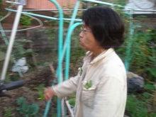 bamboo lanta.