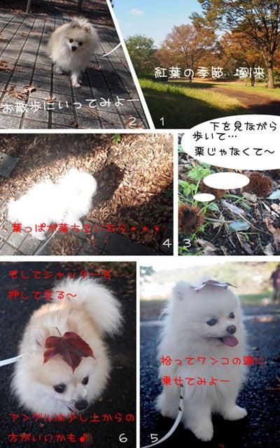 ★イケポメパラダイス★-紅葉まつり2