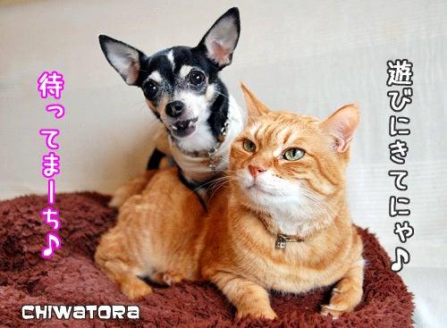 チワワとトラ猫