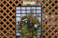 $雪ノ下の過ごし方-2010フラワーセンター大船植物園出展作品