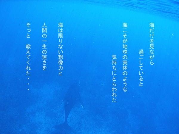 $イルカ画像イルカツアー!ハワイ・御蔵でネイチャーヒーリング 【byイルカアルバム】