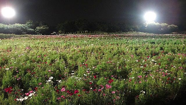 /stat.ameba.jp/user_images/20111105/15/pasobell/3e/a0/j/o0640036011592378520.jpg
