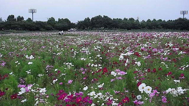 /stat.ameba.jp/user_images/20111105/15/pasobell/7f/10/j/o0640036011592378203.jpg
