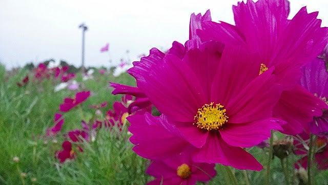 /stat.ameba.jp/user_images/20111105/15/pasobell/d3/cb/j/o0640036011592378239.jpg