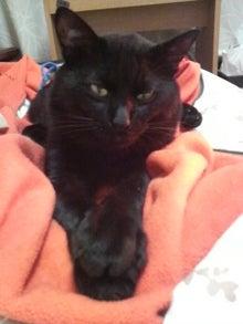 おむつ猫 リュヌの部屋-2011110102060001.jpg