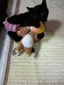 おむつ猫 リュヌの部屋-2009121000450000.jpg