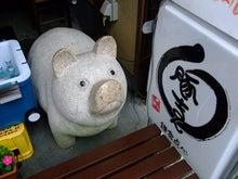 鎌倉のブタ