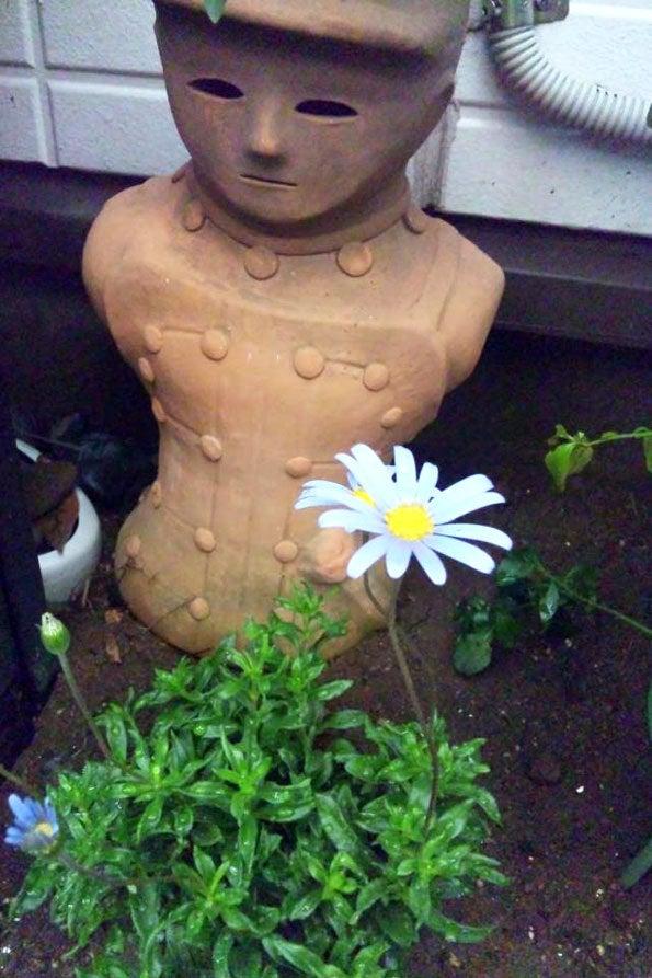 「頑張ろう!千葉」-可愛い花