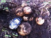 Web-Dが農業するけど他もするぞ~!!-2011最初のジャガイモ収穫