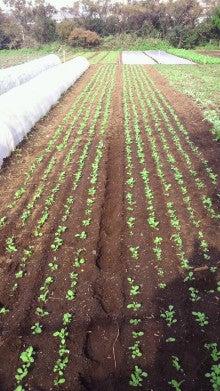 新規就農日記-2011110813070000.jpg