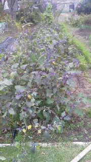 農園長のブログ-2011110615360000.jpg