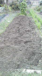 農園長のブログ-2011110616480000.jpg