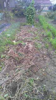 農園長のブログ-2011110615470000.jpg