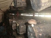 里本庄四季の風 いそべ農場