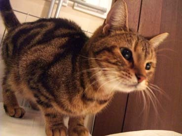 脊山麻理子オフィシャルブログ「天然寫眞的日乗」Powered by Ameba-みかさんの猫☆