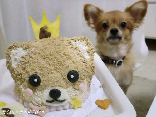 こぐまなポメとかぴばらチワワ-犬用ケーキショップ 犬のケーキ屋さん☆ポワン
