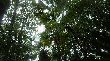 小笠原エコツアー 小笠原エコツーリズム  小笠原旅行 小笠原観光 小笠原の情報と自然を紹介します