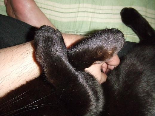 ネコに真珠・豚にゴハン-おてて