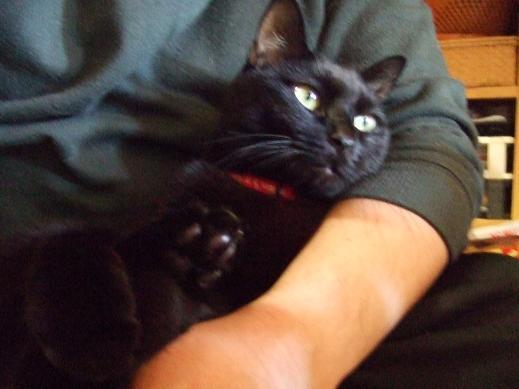 ネコに真珠・豚にゴハン-ぽっかぽかだにゃぁ