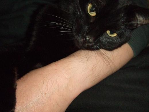 ネコに真珠・豚にゴハン-とろ~ん・・・