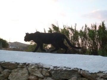 キボトス付近のネコ